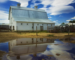 What I'm told is never for certain (Dave Arnold Photo) Tags: ranch windows sky usa reflection colo clouds barn us photo colorado image farm picture pic images clear loveland photograph american co getty barnyard weathervein farmyard larimercounty davearnold greatimage canonequipment canonphotographer bestcapturesaoi davearnoldphotocom coloradobarn larimerco arnoldd