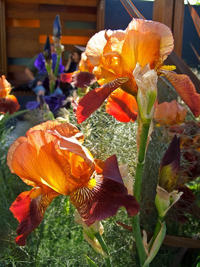 2010-05-25   Chelsea Flower Show  204.jpg