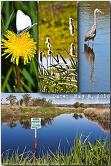20100508_SerpentineRiverBirdSanctuary