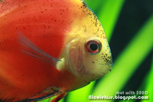 red fish macro