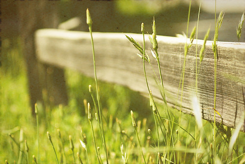 Foothill fence (by Luvin' the light)