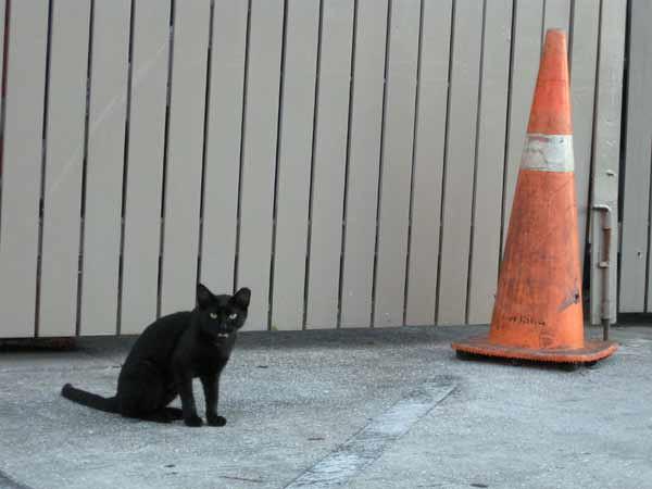 cat-and-cone