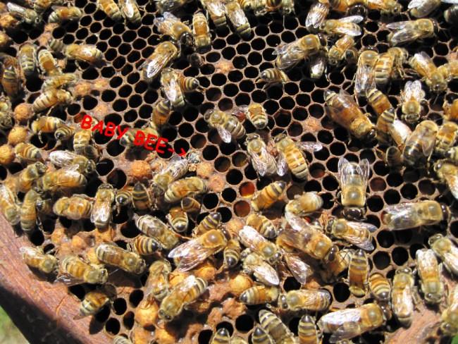 beekeeping 243 (650 x 488)