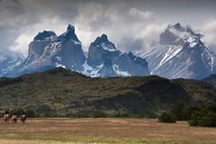 20091220 PN Torres del Paine 124 (blogmulo) Tags: chile travel camp horses patagonia mountains del america canon lago caballos ar luna viajes yurt miel andes cuernos toro pn montañas lunademiel torres sudamerica paine canon450d blogmulo 200912