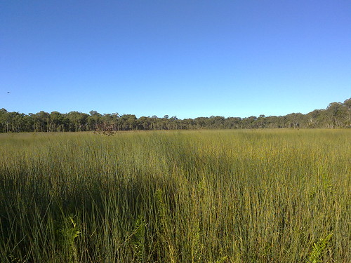 Deagon Wetlands