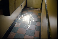 sneaking light (scott w. h. young) Tags: light sun film window 35mm hallway onthefloor itsalive