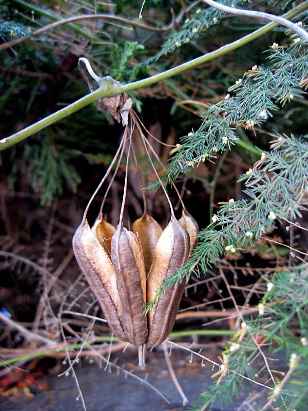 13-10-2010-natural-lantern