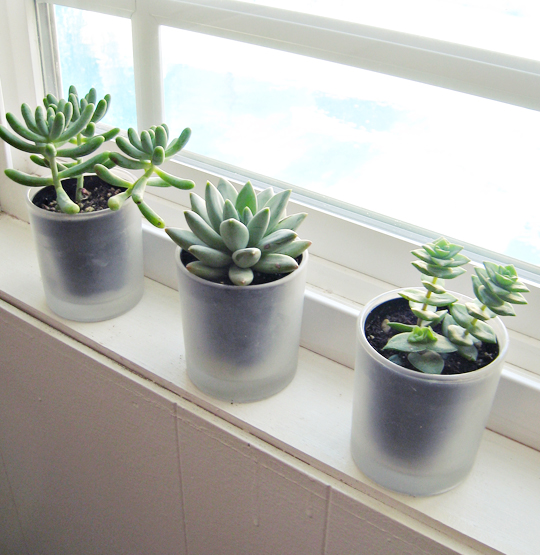 tiny succulents on the window+frosted glade candle jars as vases