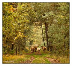 Please ... Don't look back ... (Alex Verweij) Tags: autumn forrest path herfst pad 7d friendly bos herfstkleuren wandeling weerterbergen hooglanders weert 24105mm laurabos loofbomen alexverweijcanon