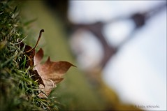l'automne (helen sotiriadis) Tags: blue autumn sky brown paris france macro green tower fall grass closeup canon leaf dof bokeh ground eiffel depthoffield toureiffel tilt canonef50mmf14usm canoneos40d dslrmag parcducampsdemars