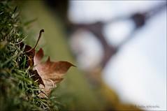 l'automne (helen sotiriadis) Tags: blue autumn sky brown paris france macro green tower fall grass closeup canon leaf published dof bokeh ground eiffel depthoffield toureiffel tilt canonef50mmf14usm canoneos40d dslrmag parcducampsdemars