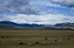 pasture (basha04) Tags: sky usa beauty landscape colorado scenes 2010 basha04