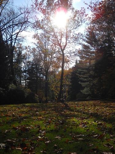Longwood October 2010 146