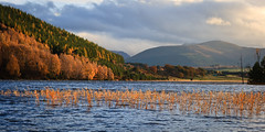 """Autumn at Loch Pityoulish • <a style=""""font-size:0.8em;"""" href=""""http://www.flickr.com/photos/26440756@N06/5143624441/"""" target=""""_blank"""">View on Flickr</a>"""