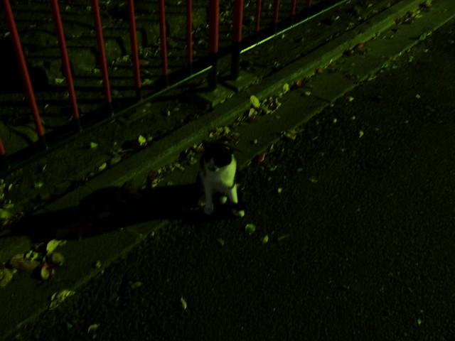 Today's Cat@2010-11-10