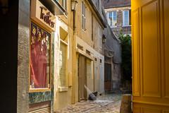 Vieux Versailles (Chrisar) Tags: nikon nikond7100 angénieux angénieux3570