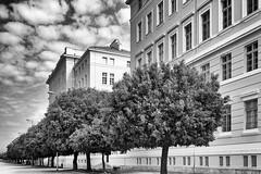 0536 Cotton Clouds Over Zadar (Hrvoje Simich - gaZZda) Tags: nopeople trees alley city buildings windows old sky clouds cotton zadar europe croatia nikon nikond750 nikkor283003556 gazzda hrvojesimich