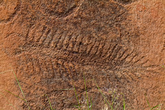 The Tingler (W9JIM) Tags: w9jim rockart petroglyph tingler thetingler centipede canyonlands 7d 24105l hwy211