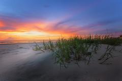 Beach Dune (Brad Truxell) Tags: florida newsmyrnabeach beach sand sunrise ocean sigma1020mm nikond7000