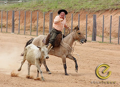 IMG_6186 (Edu Rickes) Tags: brazil horses brasil caballos rodeo cavalos rs riograndedosul gaúchos gaúchas beautifulshots piratini gineteada canon450d brazilianphotographers fotógrafosbrasileiros tirodelaço todososdireitosreservados fotógrafosgaúchos culturagaúcha edurickes belasimagens rodeiogaucho edurickesproduçõesfotográficas canonrebeldigitaleosxsi copyright©2010 fotografiaslegais