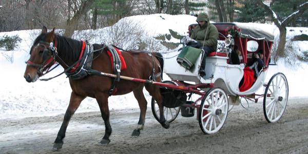 nyc-xmas-horse-central-park