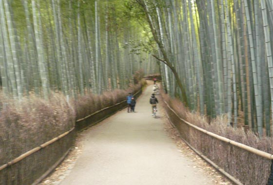 The fantastic Bamboo forest itself, a Panda would go nuts here!