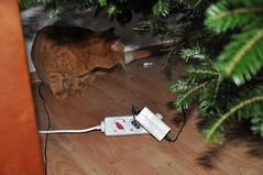 Rubi - The destroyer (elpaulet) Tags: catnipaddicts