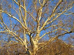 Great Falls - winter tree beauty (karma (Karen)) Tags: trees light greatfalls maryland magichour