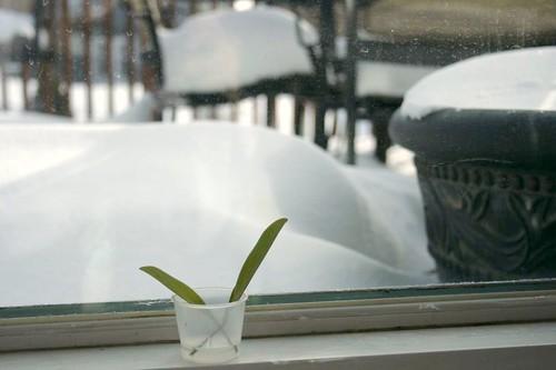 big snow 2010