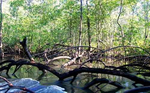 Costa Rica_mangroves