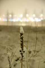 (mO0nkey) Tags: trees white snow nature misty night canon lights dof bokeh ground
