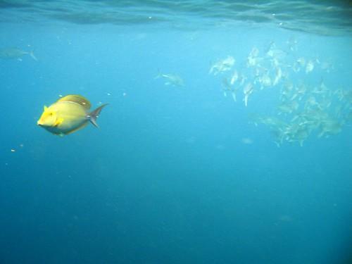 costa rica underwater 001