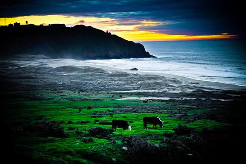 フリー画像| 自然風景| 海の風景| ビーチ/海辺| 牛/ウシ| 夕日/夕焼け/夕暮れ|      フリー素材|