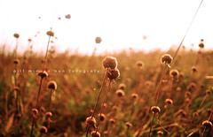 What a glorious morning is this. (alif  mim  ya  nun) Tags: morning flowers summer plants sun sunlight blur love beautiful sunshine sunrise nikon sweet bokeh glory awesome famous smooth glorious luv flare fav awake fabulous favourite tone breathtaking sunray sunflare magnificient fotografy lawa cantik luvly temperate sunlite chantek alifmimyanun