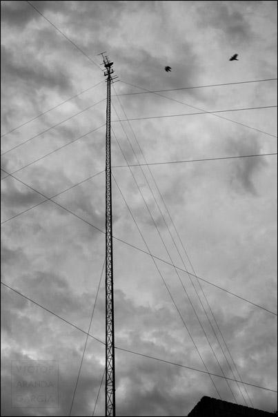 Antena, cables de sujeción y pájaros