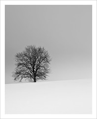 Single Tree (Stephmaster) Tags: schnee blackandwhite white snow black tree field landscape frozen frost availablelight feld himmel nikkor landschaft baum singletree mecklenburgvorpommern schwarzweis d700 mecklenburgwestpomerania nikkor2470f28