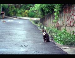 Alley Cat (khaniv13) Tags: morning house film wet analog cat alley cloudy neighborhood jakarta asphalt nikonfe fujinps160 100mmf28seriese khaniv13 jalanbangka
