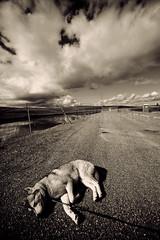 Old Man's Dog (MrBisaya) Tags: california northerncalifornia clouds sunnyday blackwhitephotos