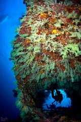 Through the bushes (Lea's UW Photography) Tags: underwater maldives fins malediven softcoral unterwasser tokina1017mm weichkorallen leamoser