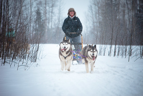 Sled Dogging in Prince George British Columbia
