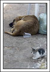 Festa de Iemanj - Gato e Cachorro! (Marilton Trabuco) Tags: mar bahia salvador felino festa iemanj festaspopulares riovermelho festadeiemanj