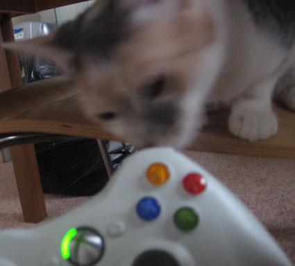 X-Box Kitten