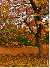 Colorful (seyed mostafa zamani) Tags: life park camera new autumn light color tree art love nature colors beautiful beauty look yellow wall night canon garden landscape photography eos hope leaf nice colorful asia iran arts dreams iranian dear sec chapter 2009   lovly               eos450d  450d   marand     natvryalyst