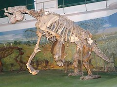 Giant Ground sloth (Megatherium sp.) MEGATERIO GIGANTE ~ Original = (3568 x 2624) (turdusprosopis) Tags: megatherium megaterio groundsloth extinctanimals pilosa preguias xenarthra perezosos megatheriumamericanum mammalsofuruguay faunaargentina extinctmammals faunadeargentina animalsofargentina animalesdelaargentina mamferosargentinos mamferosdeargentina animalesargentinos animalesdeargentina animalesdeuruguay animalsofuruguay faunauruguaya faunadeluruguay faunadeuruguay mamferosdeuruguay mamferosdeluruguay mamferosuruguayos animalesuruguayos animalesdeluruguay mammalsofargentina preguiagigante faunaofuruguay megatheriidae mammalsofsouthamerica uruguayananimals uruguayanmammals uruguayanfauna megateriogigante perezosoterrestre perezososterrestres megatrios megatriogigante megatheriumamericanumcuvier1796 megaterios