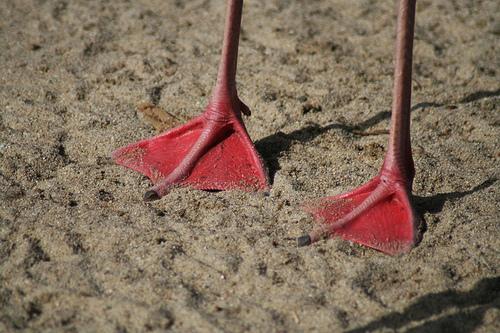 pigeon toed 17