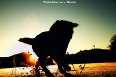 Dance with sunrise (waltersoluh) Tags: winter dog snow sunrise shilouette morningglow thelittledoglaughed platinumphoto colorsofthesoul dragondaggerphoto magicunicornverybest adriënnesmagicalmoments
