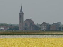 De Zilk (twiga_swala) Tags: flower holland netherlands field bulb tulip zuidholland bollenstreek zilk