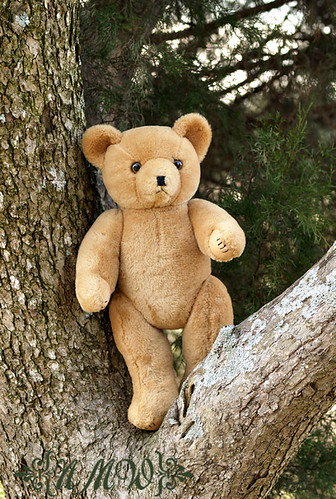 Ted in a tree