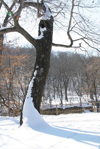 snow ent