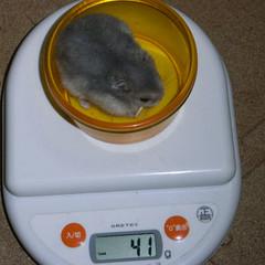 コー太は、体重増加です。